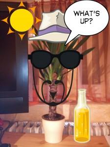 Yucca picsay